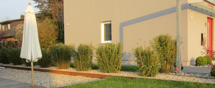 bambus pflanzenshop bambus als gr ner sichtschutz. Black Bedroom Furniture Sets. Home Design Ideas