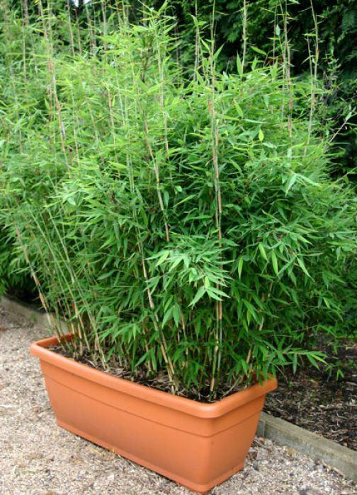 Bambus-Pflanzenshop - Pflanzkübel mit Untersetzer kaufen