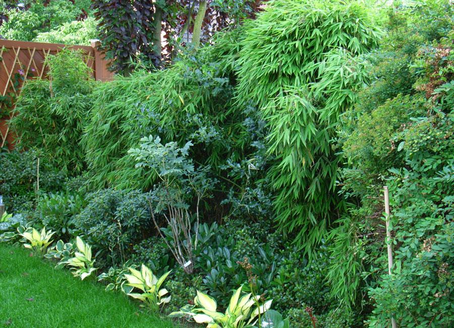 bambus pflanzenshop wir empfehlen sich unter infos. Black Bedroom Furniture Sets. Home Design Ideas