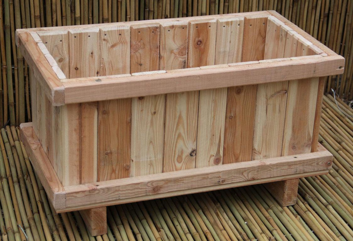bambus pflanzenshop bambus als k belpflanze auswahl und. Black Bedroom Furniture Sets. Home Design Ideas
